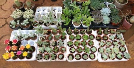 Sale! Plants at a discounted price in Santacruz